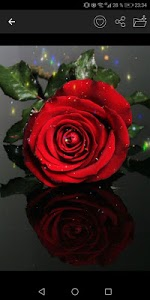 screenshot of Flowers And Roses Gif version 1.0
