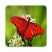 Download High Quality Butterfly Wallpaper 1.1.1 APK