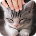 Download Pat the Cat Simulator 1.1 APK